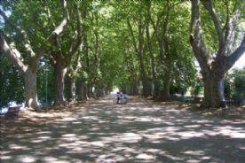 The magnificent avenue of plane trees in Ponte de Lma