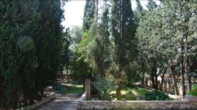 Front Garden and Evergreen Trees /water features