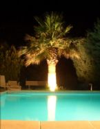 Swimming Pool Palm Tree