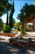 Large walled courtyard with Jacaranda trees
