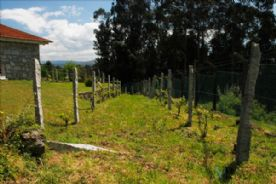 Vineyard ( main section)