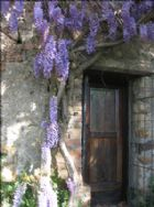 Wisteria canopy over door to downstairs