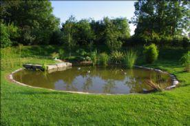 Well-stocked garden pond