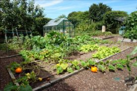 Enclosed veg garden
