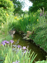 Small pond fed by outflow from geothermic central heating and hot water.