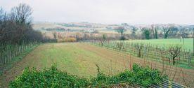 field - vines - river at bottom