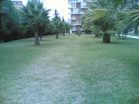 Part of the gardens