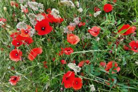 Wild flowers abound