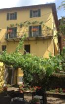 Shady grape vine