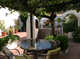 Shady dining under the vine