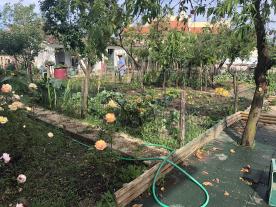 bio backyard