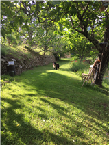 part of the grounds, the path leading to the woodland