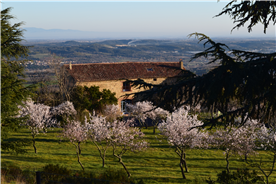 View of house from the almond orchard in February