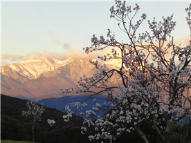 View of Canigou from road near house