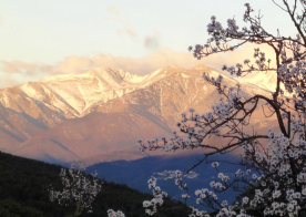 Walking from Mas Pallagourdi to Ceret in early spring