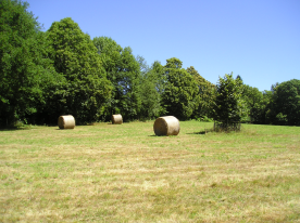 Our field after hay-making