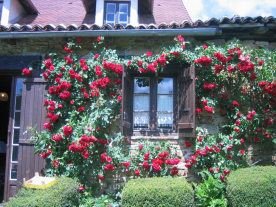 Rear of house -- bathroom window with roses
