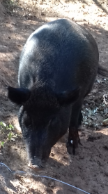 Animal sanctuary nearby in the Minervois