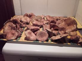 Great mushroom picking area