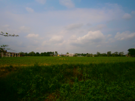 View from house & garden of fields
