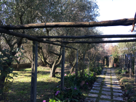 Pergola and orchard