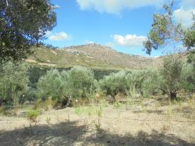 Upper slope - very dry summer.