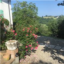 property in Felino