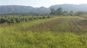 property in Machairado