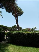 Garden of apartment