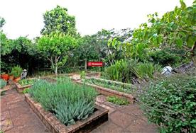 Established herb garden