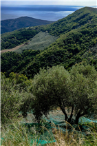View of olive groves, the unspoilt Cilento national park and the sea, behind the Monte Stella