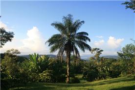 View towards coast