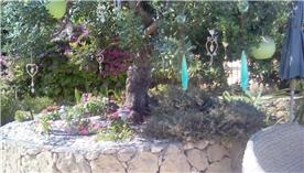TREE IN STONE CIRCLE