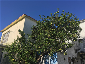 Lemon tree and staircase leading to the second floor