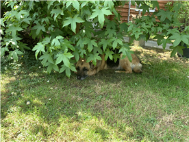 Getting some shade under a tree