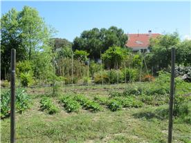 Veg Garden growing