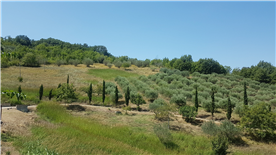 View from the house of the olive grove.