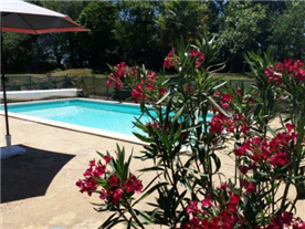 Pool surrounded by flower beds