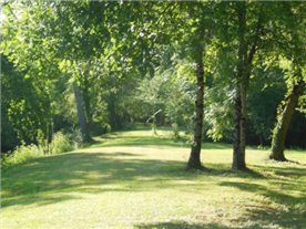Woodland with mature trees