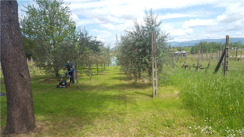38 established olive trees on the property
