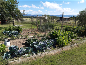 Vegetable garden with mountain views