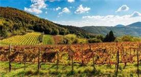 Euganean Hills Vineyards