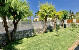 Manicured lawn and Pepper Trees