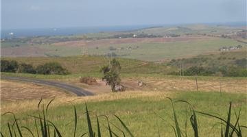 property in Tongaat