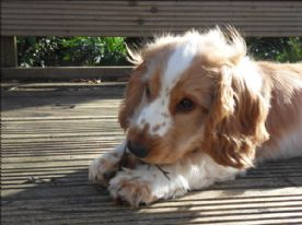 Jaffa on the deck