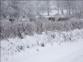 Winter in La Creuse