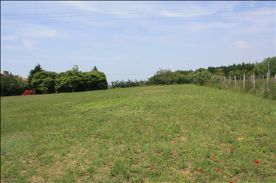 Large Paddock suitable for horses/ponies or grazing