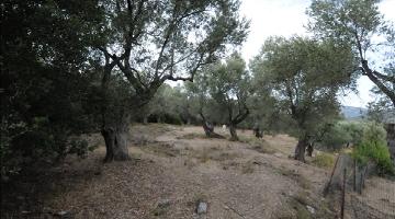 property in Pirgi