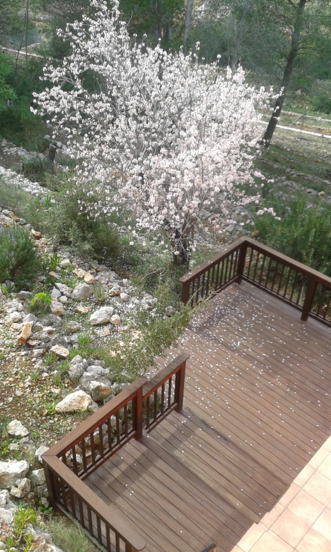 Almond tree from Naya