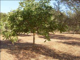 Your own Lemon trees
